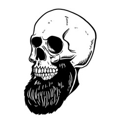 hand drawn bearded skull design element vector image