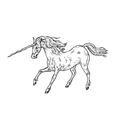 mythological unicorn mythical antique magic vector image