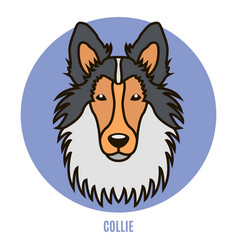 Portrait of collie in style of flat vector