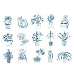 Succulents set cactus peyote echeveria vector