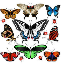 Butterflies set small vector image