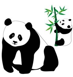 Set of cute panda bears with bamboo vector image