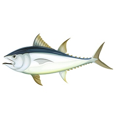 Atlantic bluefin tuna vector image vector image