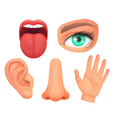 cartoon sensory organs senses organs eyes vision vector image