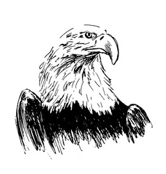Hand drawing eagle vector image