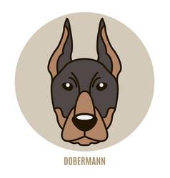 portrait of dobermann vector image