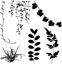 Silhouettes leaf and vine plant vector