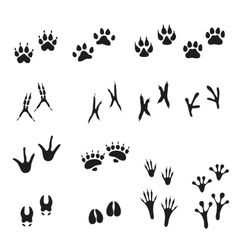 Tracks of wild animals and birds Paw print vector