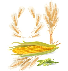 Cereal plants set vector image
