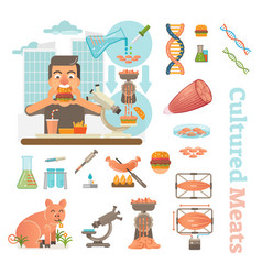 cultured meat laboratory objects collection vector image