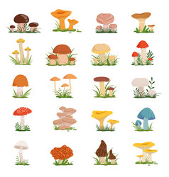 different mushrooms on green grass set vector image