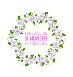 Garland with pink and white bindweed flowers vector