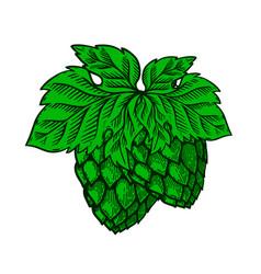 hand drawn beer hop design element for poster vector image