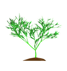 the tree with green leafage on a whie background vector image