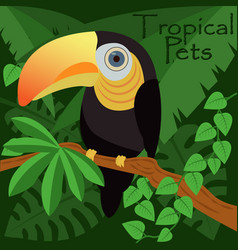 toucan bird in a jungle tropical pets vector image
