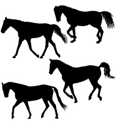 set silhouette of black mustang horse vector image vector image