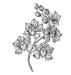 Contour Orchid vector image vector image