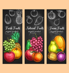 sketch banners of fresh exotic fruits vector image