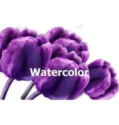 purple tulip flowers watercolor bakground floral vector image