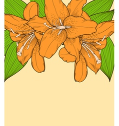 beautiful background with lilies hand-drawn vector image