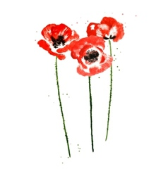 Collection of watercolor poppy flowers vector image vector image