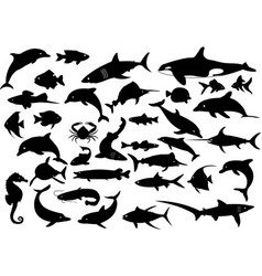 35 dolphins sharks whales and fishes vector image
