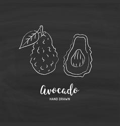 Avocado drawing hand drawn sketch vector