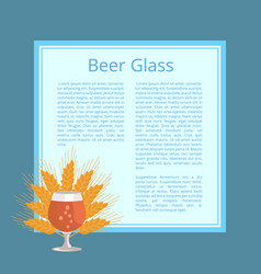 Beer glass with wheat ears isolated vector