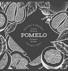 Hand drawn sketch style pomelo banner organic vector