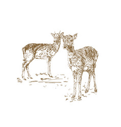 Two young deer in sketch style hand drawn vector