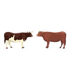 cartoon bull mammal animal isolated vector image