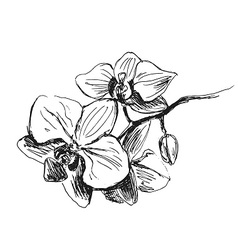 Hand sketch orchids vector image