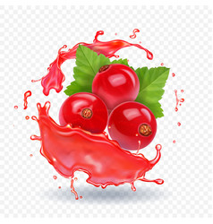 red currant in realistic juice splash vector image