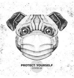 Animal pug dog wearing face medical mask covid-1 vector