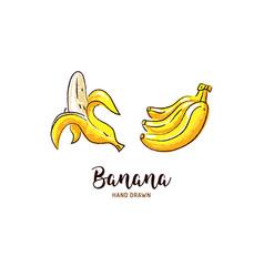 banana drawing hand drawn bananas vector image