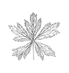 drawing plant vector image