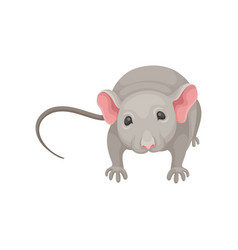 flat icon of cute mouse front view small vector image