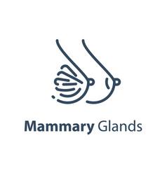Human internal organ mammary glands vector