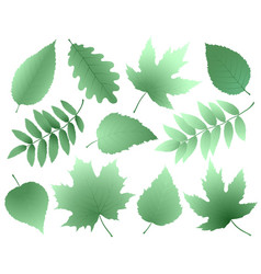 Leaves and branches silhouettes set vector