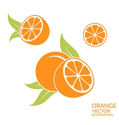 Orange Isolated fruit on white background vector image