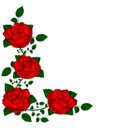 Vine red roses vector