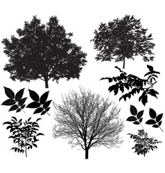 Walnut tree silhouette vector