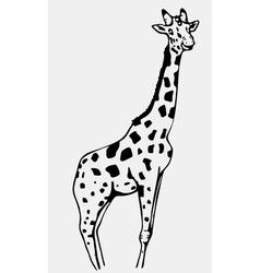 Hand-drawn pencil graphics giraffe Engraving vector image