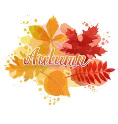 autumn watercolor typography vector image