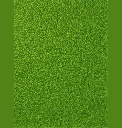 Background texture of fresh green grass vector