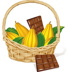 Basket full of cocoa pod and chocolate isolated on vector