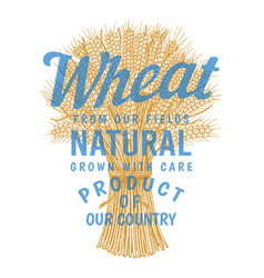 bunch of wheat logo rye spikelets and corn seeds vector image