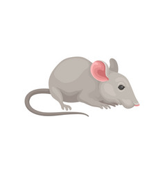 Flat icon of small cute mouse side view vector