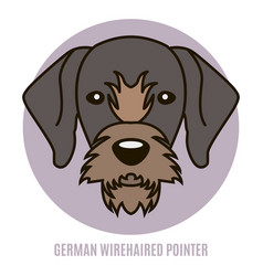 Portrait of german wirehaired pointer vector