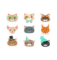 set cute cats heads different breeds vector image